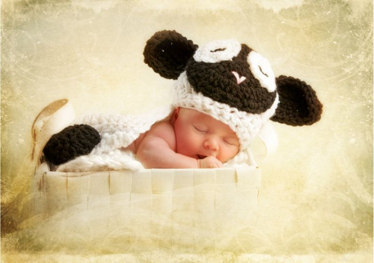source of image: https://angelavaught.files.wordpress.com/2012/02/test9j7c1606-baby-lamb.jpg