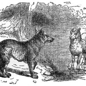 source of image: http://www.litscape.com/images/Aesop/The_Wolf_And_The_Lamb.jpg