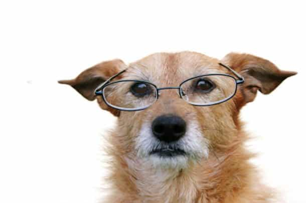 source of image: http://www.thedogfiles.com/wp-content/uploads/2010/08/old-dog-glasses.jpg